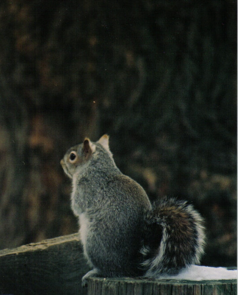 Squirrel Thoughts–Pensively Disturbed Today