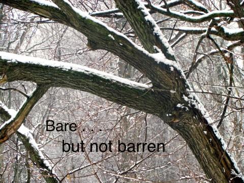 trees, pruning, life
