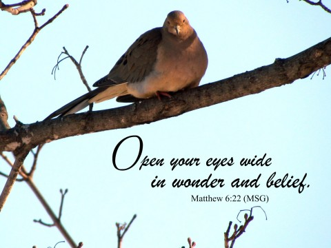 mourning dove, bird, wonder, see