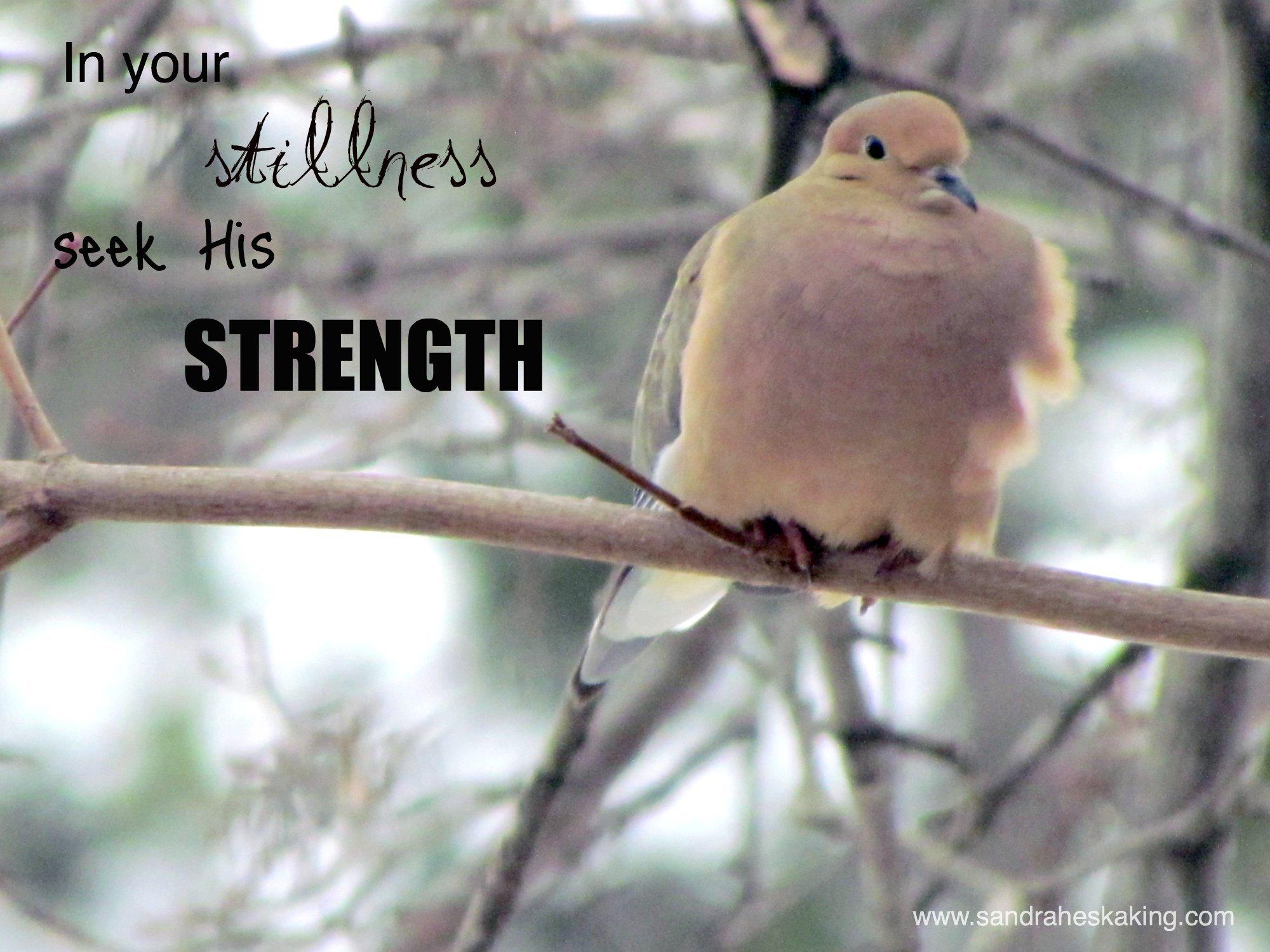 still saturday: strength