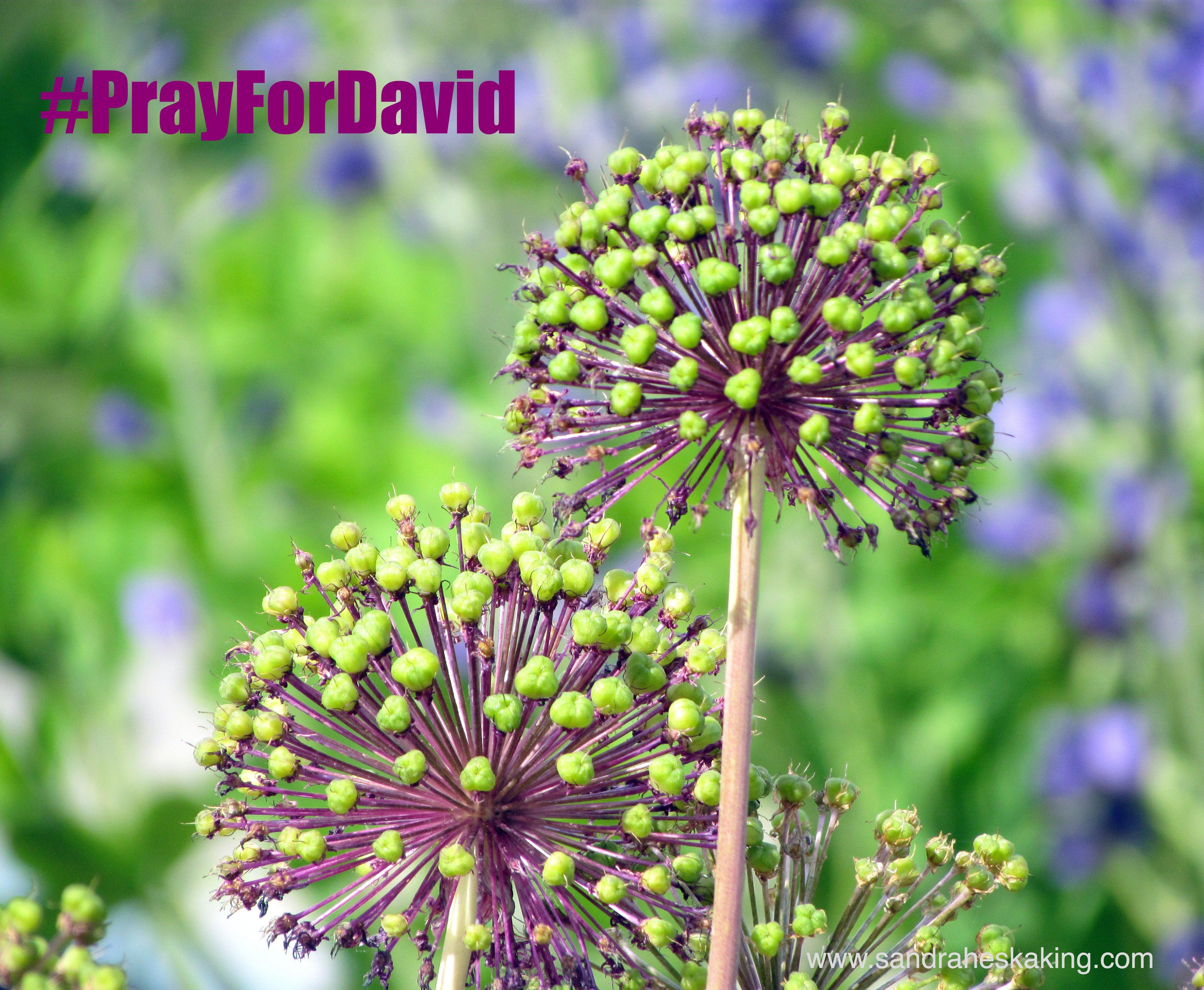in which cancer brings clarity #PrayForDavid