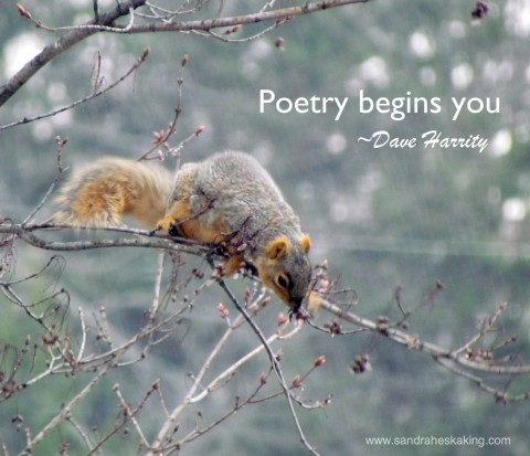 squirrel poetry 1
