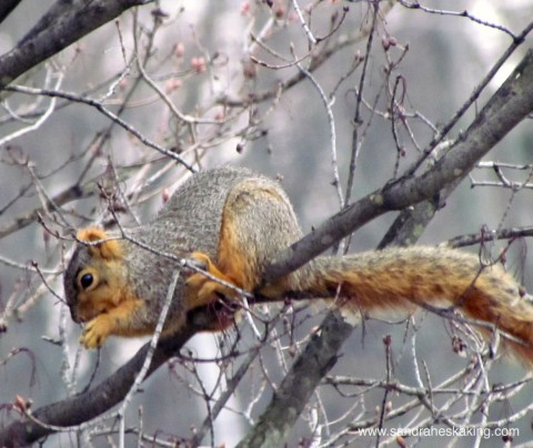 squirrel poetry 2