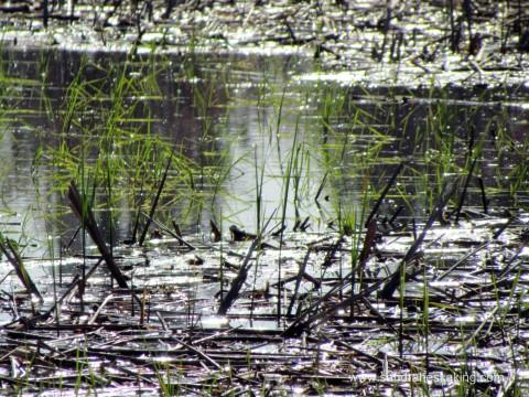 Lake Abby2