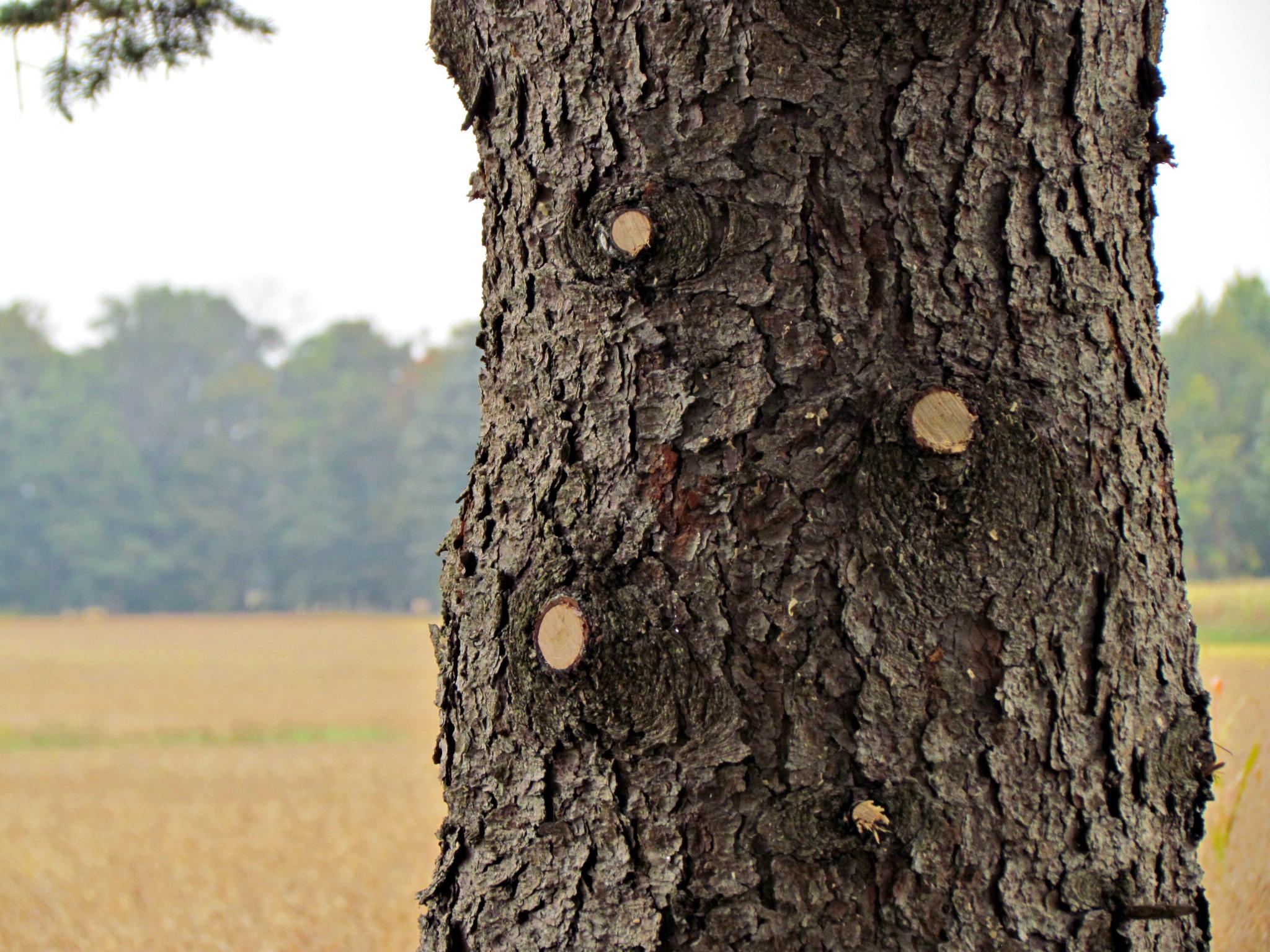 tree prune 2
