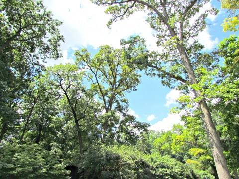 Mary Oliver - trees