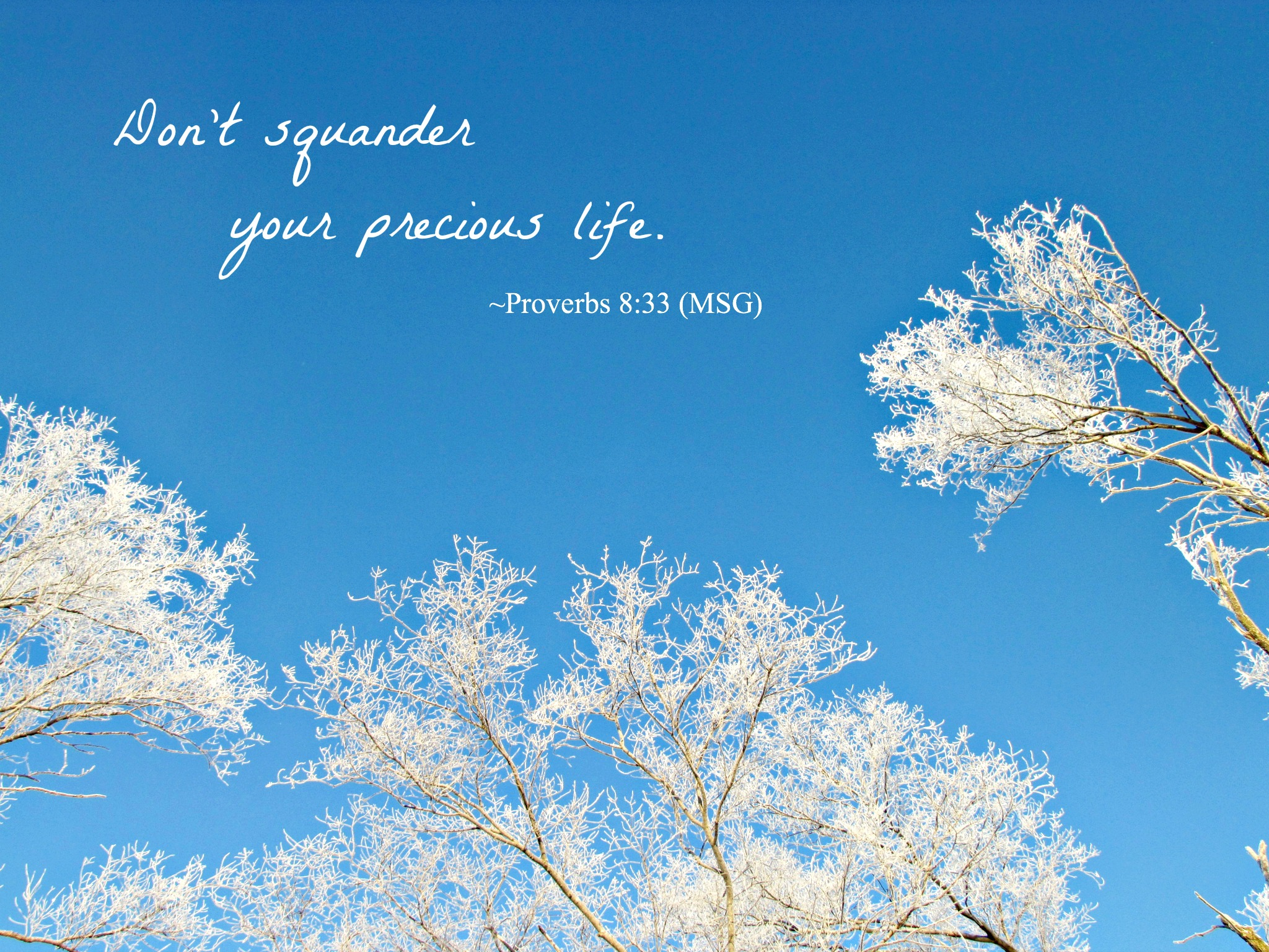 scripture sunday: your precious life
