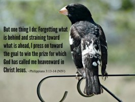 one thing grosbeak