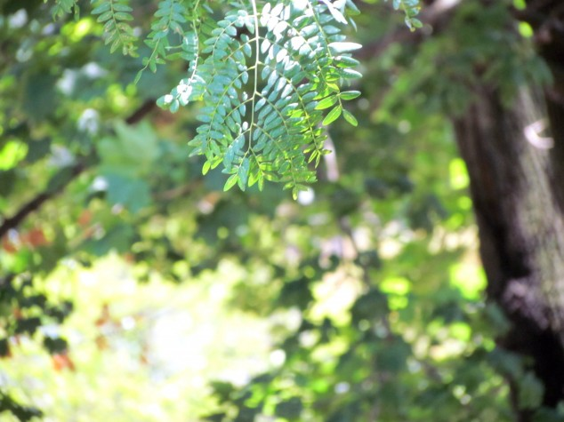 Bibledude Leaves