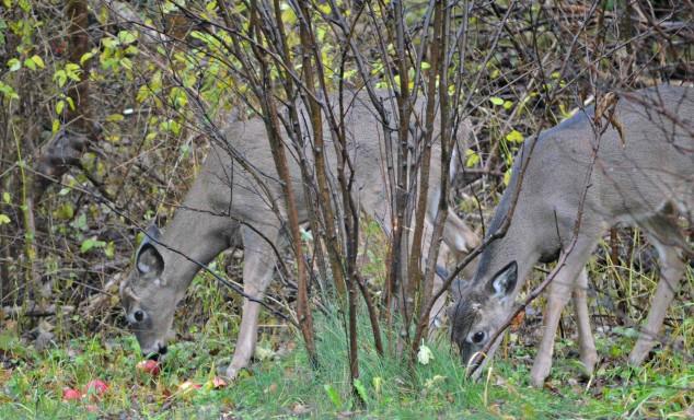 Hiland Cottage deer villanelle