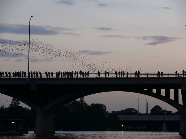 (Mexican free-tailed bats emerging from the Congress Street bridge)