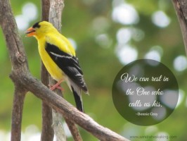 whitespace goldfinch