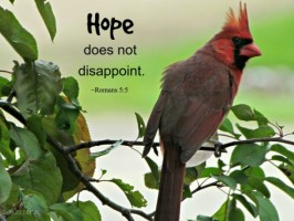 Word of the Week: Hope