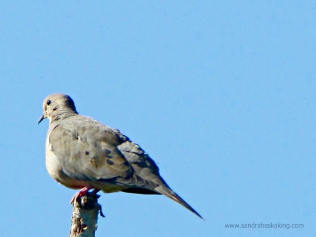 Dove - today - 2
