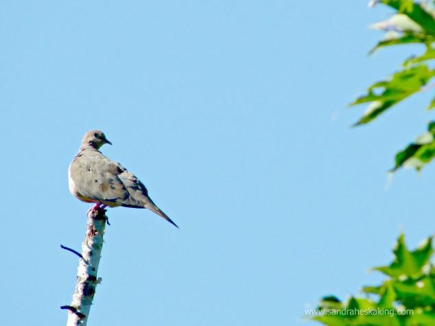 Dove - today