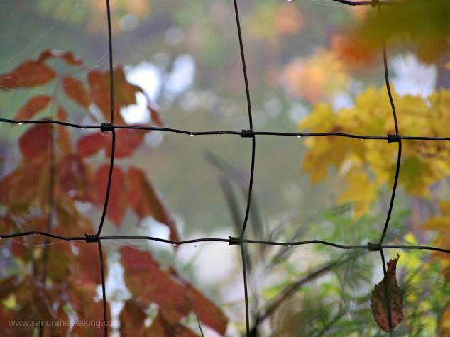 playdates fence