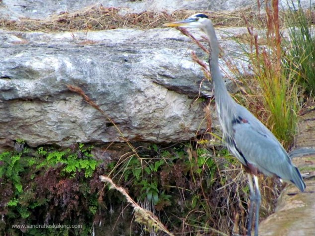 Laity Lodge heron - thanks