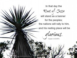Scripture Sunday: Root of Jesse