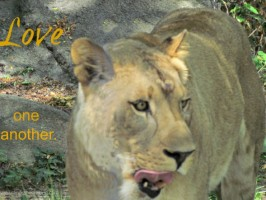 love one another lion