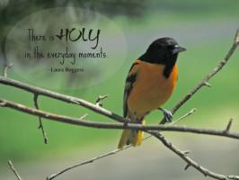 oriole - holy