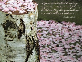 Birch - Swindoll quote