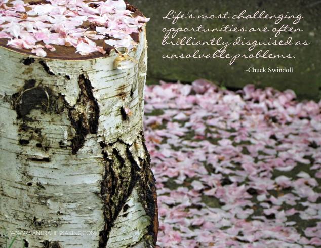 Birch - Swindoll quote
