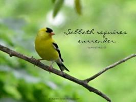 Still Saturday: Surrender