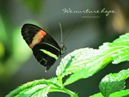 Dreaming With Darwish: Nurture Hope