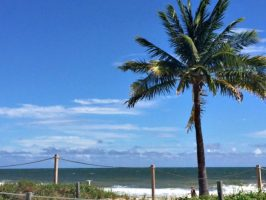 31 Days of Moving Reflections – Day 14 #SouthFloridaBound