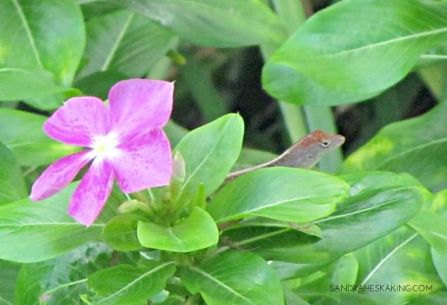 cottage-flower-2