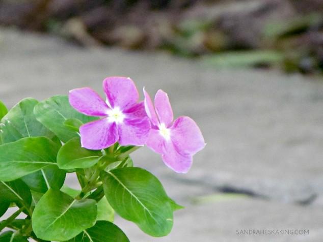 cottage-flower