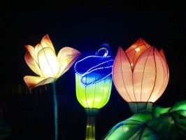 Dared: Bikes, Lanterns, and Mary Oliver